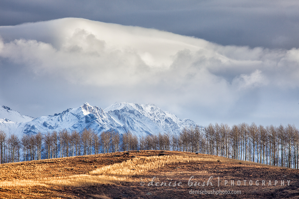A line of trees on a distant hillside stand in mornings warm light while the mountains remain in cloudy shadow.