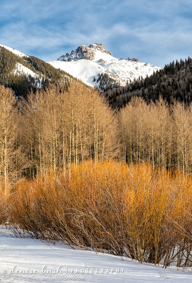 In the mountains of Colorado one of the first signs of spring is the willows waking up with vibrant yellow, orange and red.