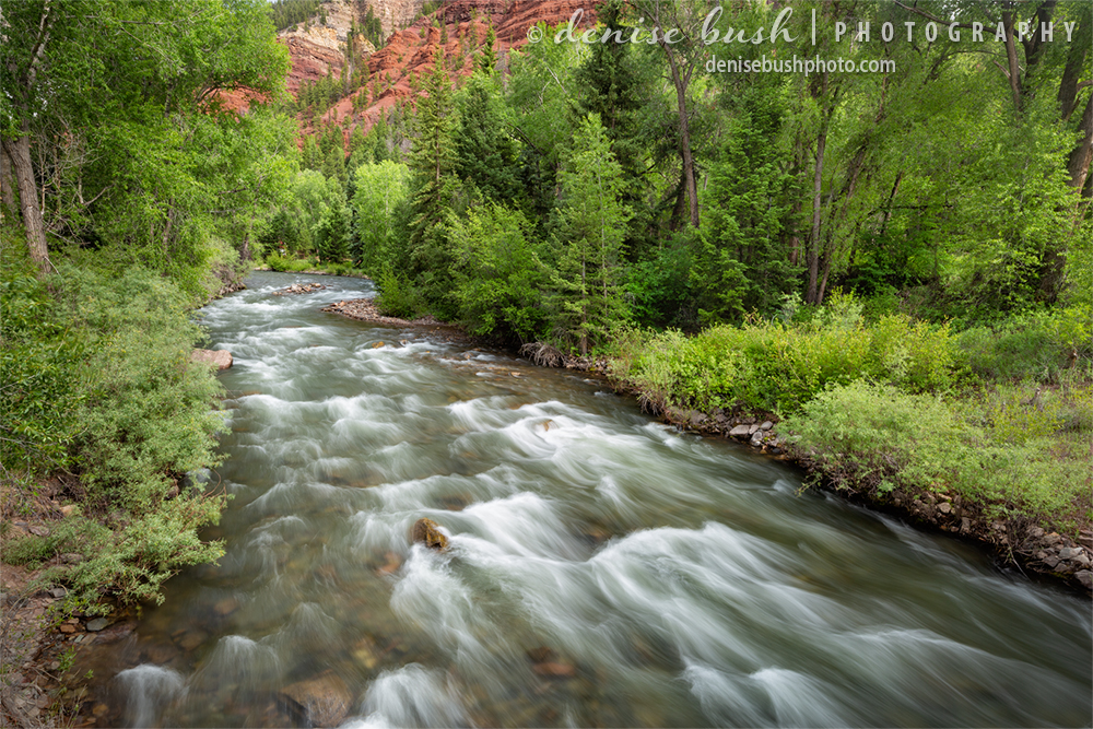 The San Miguel River merrily rushes along the spring green banks near Telluride.