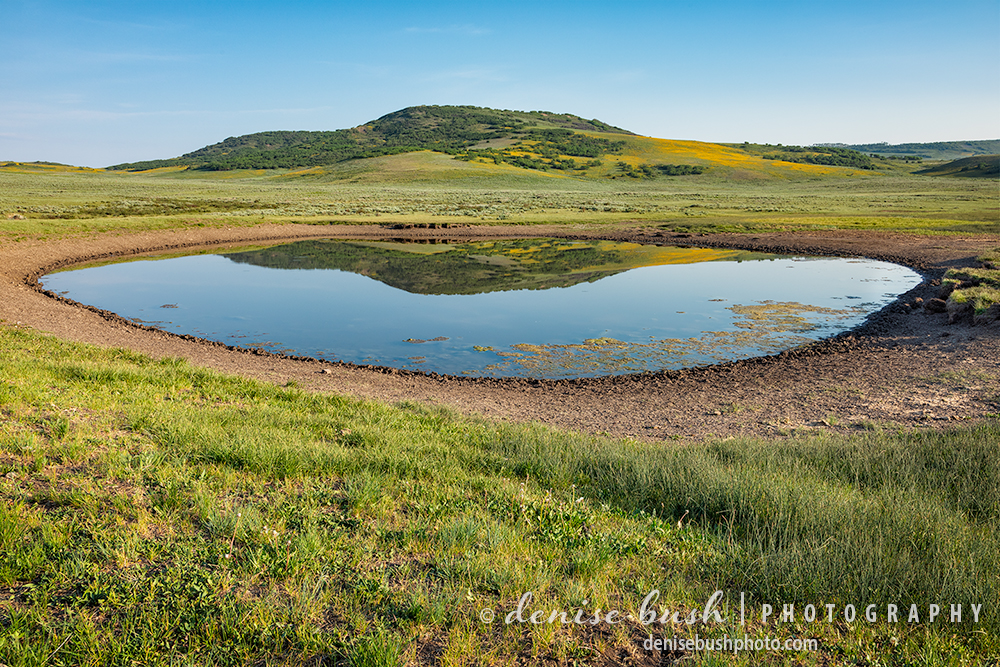 A watering hole out in grazing land provides a fun place to create a reflection photograph.