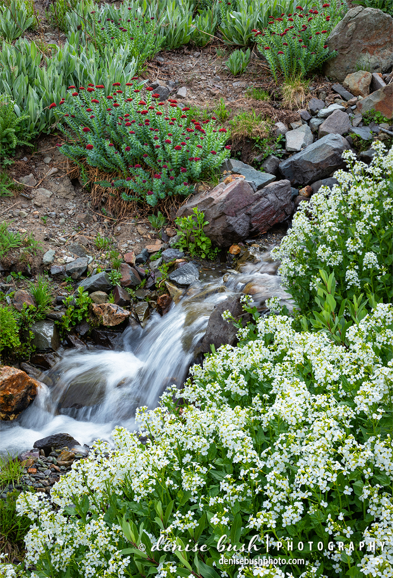 Spring melt flows from the mountain tops, surrounded with a lovely natural garden along the way.
