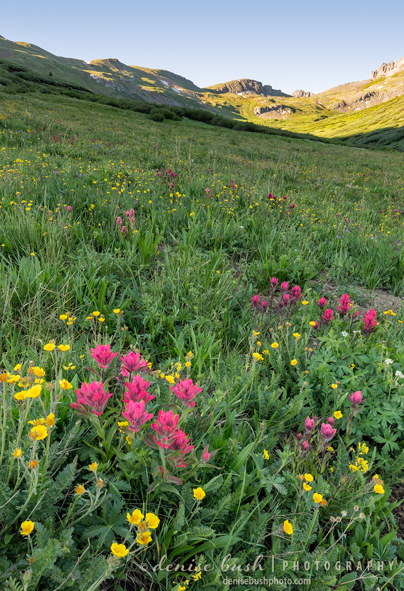 Some pink paintbrush greets the morning high in an alpine basin.