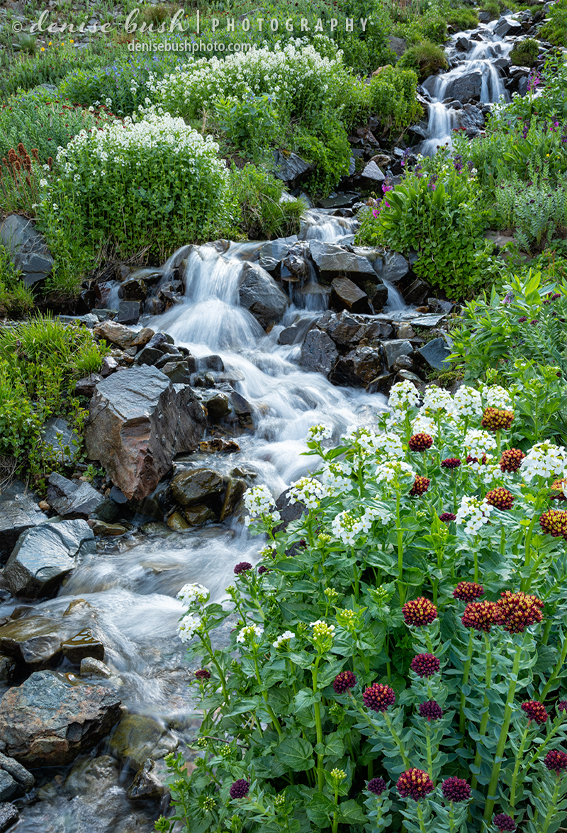 Lined with wildflowers a mountain cascade tumbles down the mountain feeding water to rivers below.