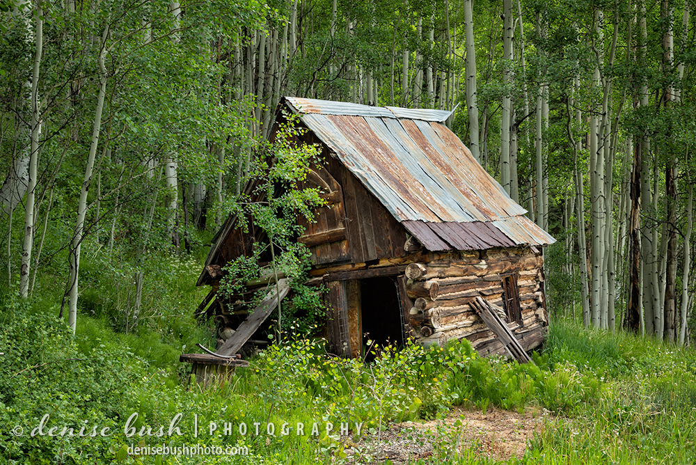 A quaint little log cabin nestled among the aspen trees tells the story of a time gone by.