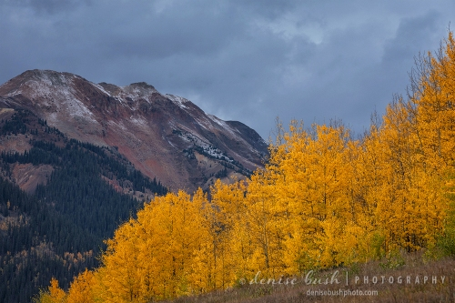 Some aspens light up with vibrant color while the sky darkens, warning of an incoming storm.