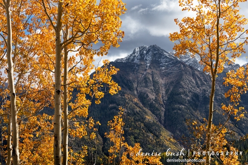 Dramatic light adds to this aspen tree scene showing the first bit of snow on a mountain peak.