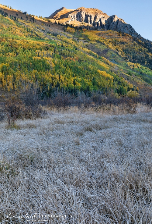 A frosty morning in a wetland area accentuates the texture of some grass for an unexpected foreground.