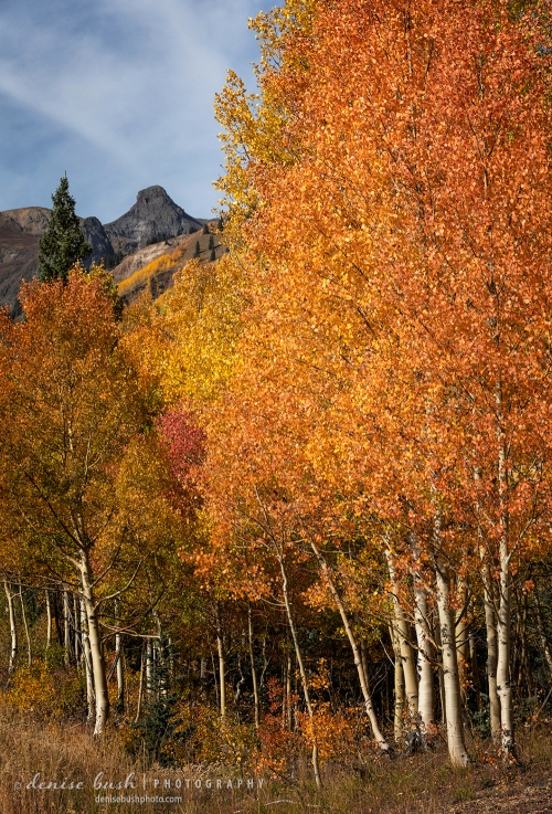 Orange aspens set the stage for a knobby mountain in the distance.