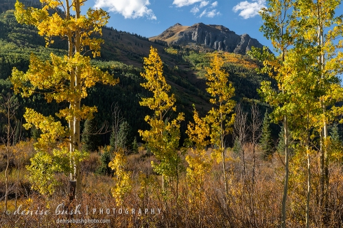 Bright sidelighting illuminates close aspen trees as a mountain shows its colors beyond.